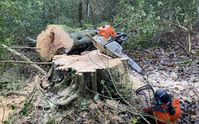 Forestry Clearing East Devon