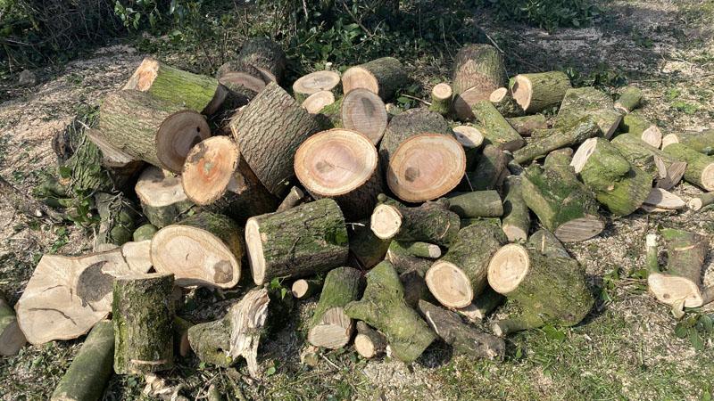 Logs For Sale East Devon