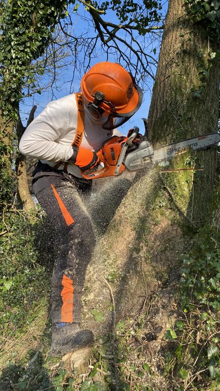 Tree Surgery East Devon