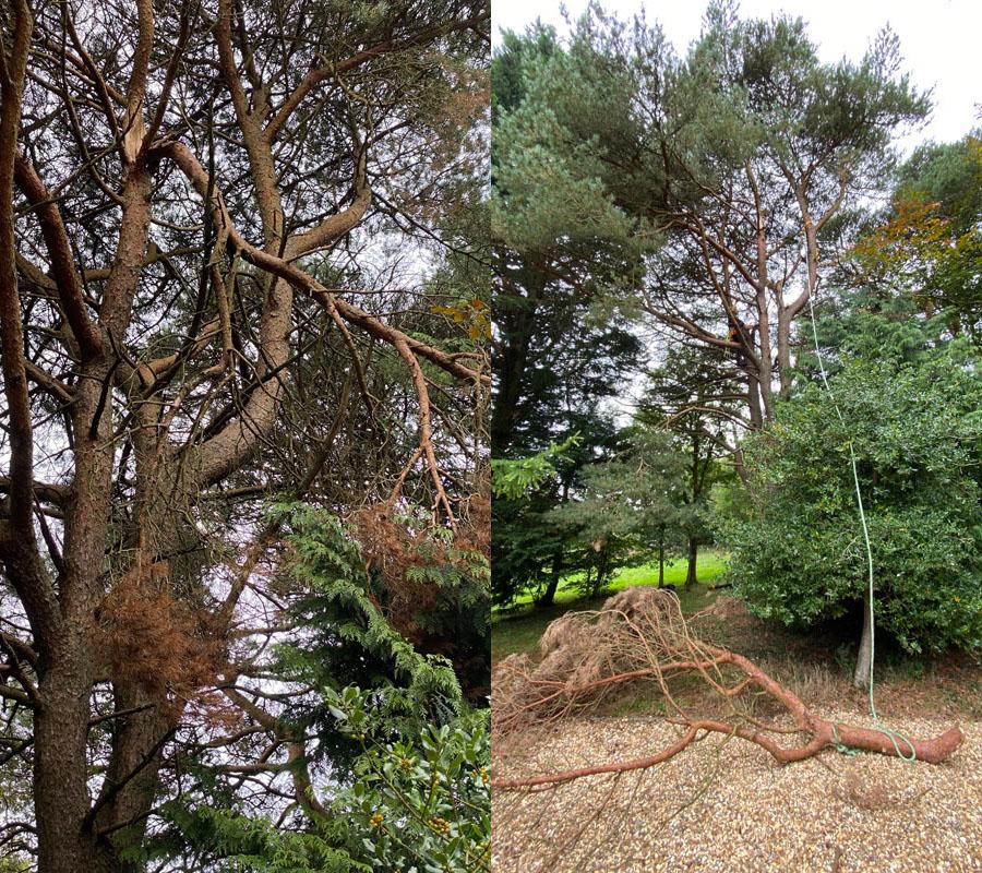 Tree Surgeon Sidmouth