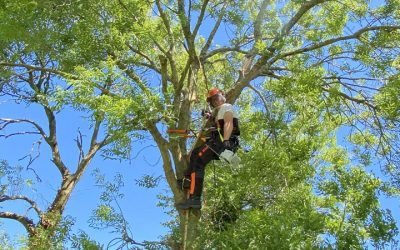 Tree Surgery Exeter