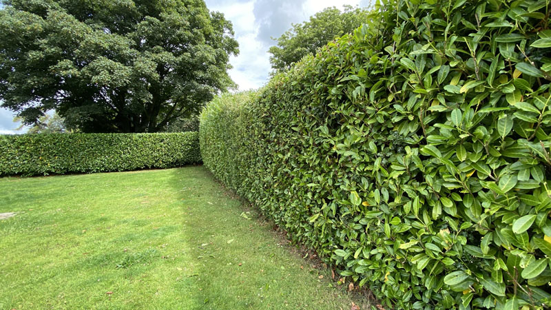 Hedge Cutting Raymonds Hill