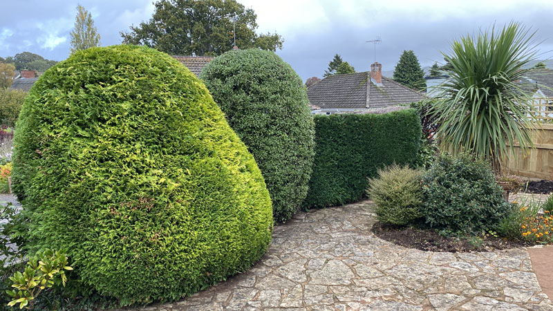 Hedge Cutting Sidmouth