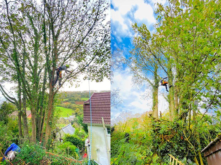 Tree Surgeon Branscombe